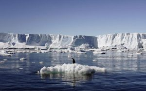 climate-change-fossil-leaves-show-how-antarctic-ice-melted-23-mn-years-ago