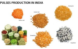 pulses production in india