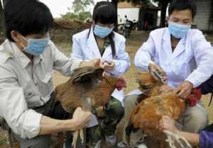 avian flu in japan